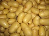 Fresh Irish Potatoes in   25436 Grob Nordende