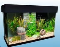 Fresh Water Fish Aquarium