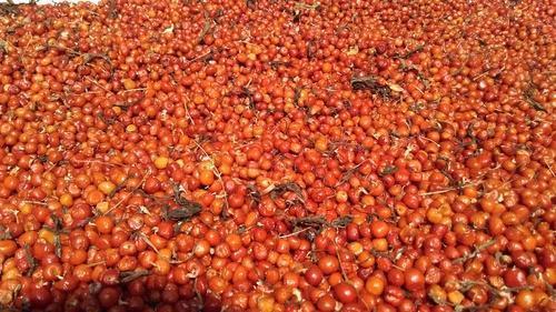 Kalihari Dry Extract