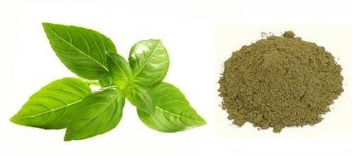 Ocimum Sanctum Dry Extract