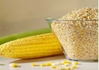 Maize Germs