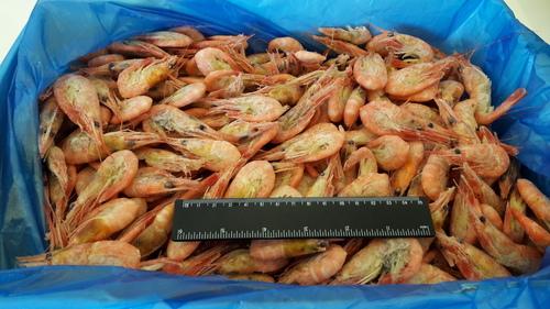 Shrimp Angular