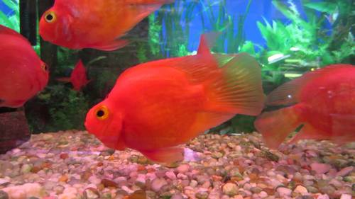 Ornamental Fish In Kolkata Ornamental Fish Dealers Traders In