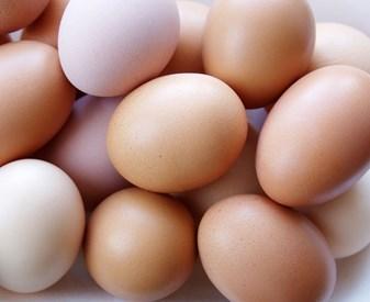 Buying Eggs - Gurmukh Co , Village Saidan, Post -Siana