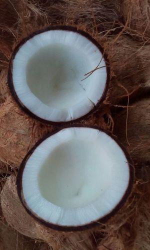 Fresh Semi Husked Coconuts
