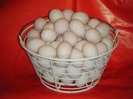 Duck Eggs Egg Weight: 70-80 Grams (G)