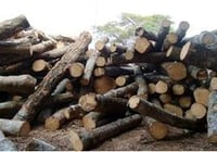 Best Price Rubber Wood