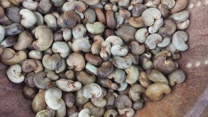 High Nutritional Value Raw Cashew Nuts Certifications: Sgs