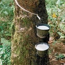 Pure Natural Liquid Rubber
