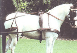 Horse Harness, Horse Harness Manufacturers & Suppliers, Dealers