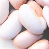 Large White Kidney Bean