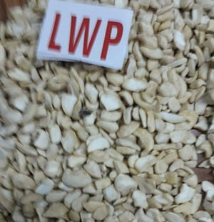 Quality Tested LWP Cashew Nuts