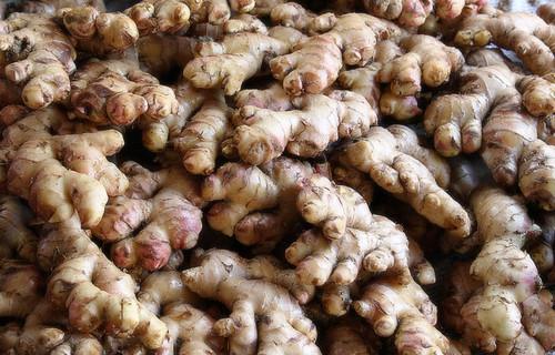 Raw Fresh Organic Ginger in   Phase-2