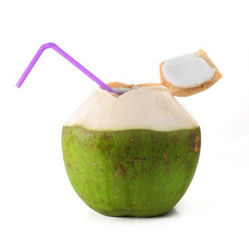 Common Natural Tender Green Coconut