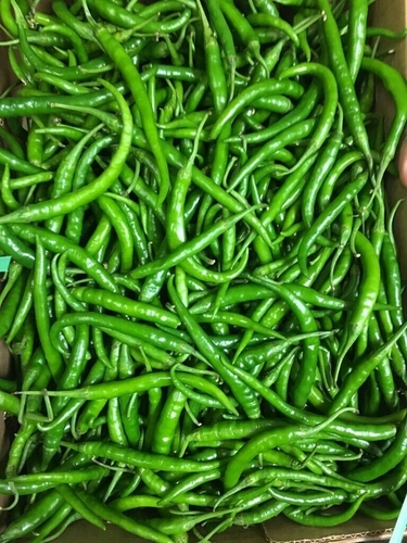 Fresh G4 Green Chilli in   Bhavani Sagar