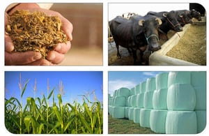 Efficient Pure Energetic Corn Silage