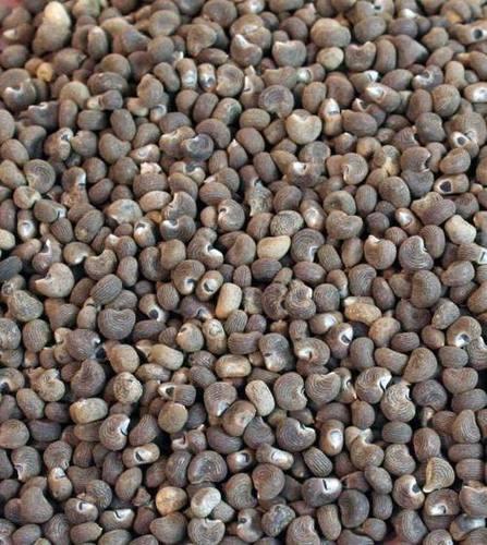 High Grade Musk Seeds
