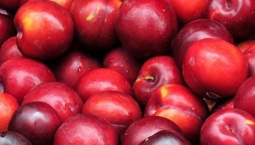 Fresh And Healthy Taste Rich Plums