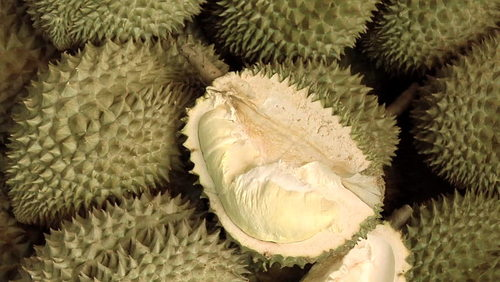 Tropical And Sub-Tropical Fruit Fresh Durians