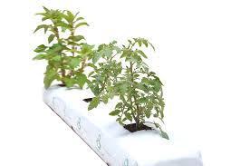 High Quality Coir Grow Bags
