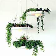 Hanging Garden Flower Plants