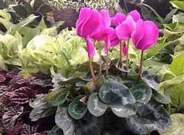 Indoor Fresh Flowering Plants