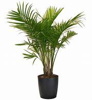 Palm Trees For Garden