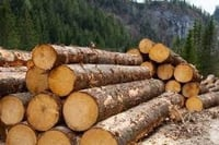 Natural Quality Timber Log