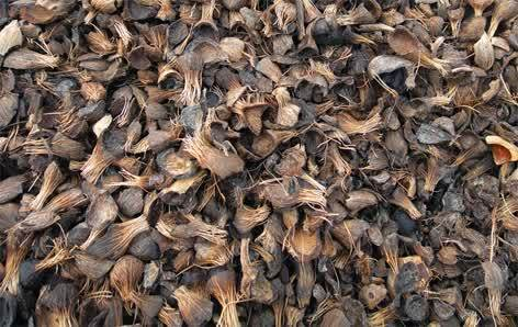 Natural Palm Kernel Shell