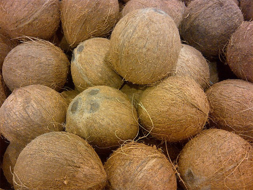 Matured Whole Brown Coconut