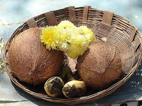Natural Fresh Water Coconut