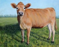 High Breed Indian Jersey Cow