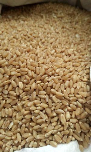 High Quality Wheat