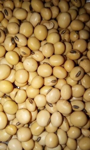 Quality Tested Soyabean