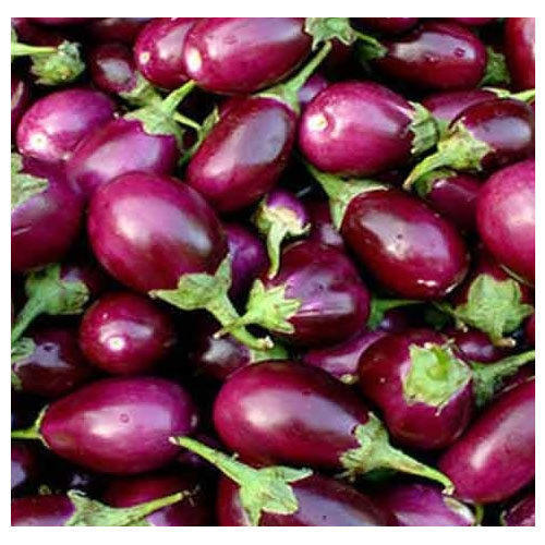 Fresh And Healthy Brinjal