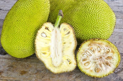 Natural Mature Fresh Jackfruit