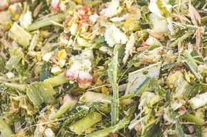 Corn Silage - Feed Supplements