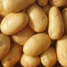 New Harvest Fresh Potato