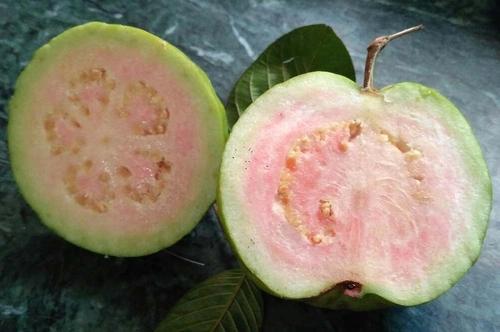 Suvarna Pink Guava Plant