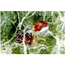 Spider Insecticide
