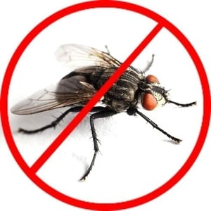 Affordable Fly Control Service