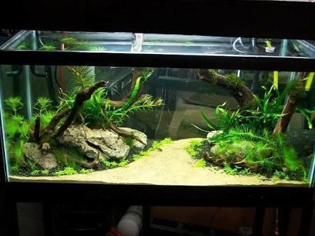 Beautiful Design Decorative Aquarium Aquarium Home A1
