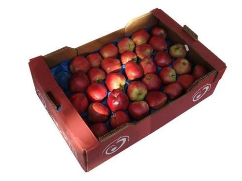 Delicious Crunchy Fresh Apple