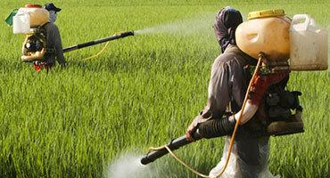 Agricultural Chemicals at Best Price in Bengaluru, Karnataka