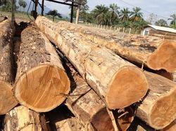 Fine Finishing Teak Wood