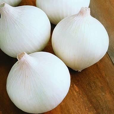 Fresh White Onion - Vegetable