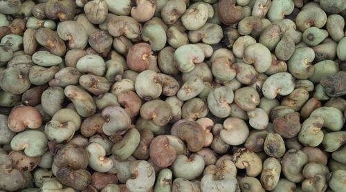 Pure Raw Cashew