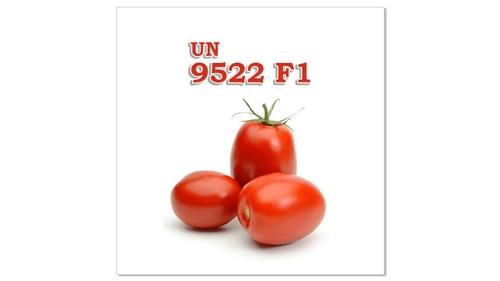 Fresh Tomato Un 9522f1