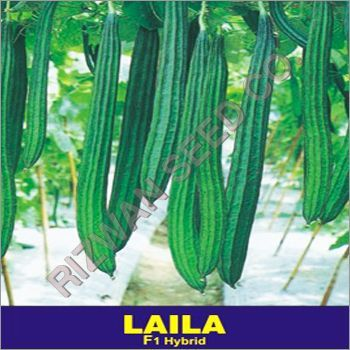 Hybrid Ridge Gourd Seeds F1- Laila