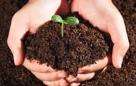 Organic Agricultural Bio Fertilizers